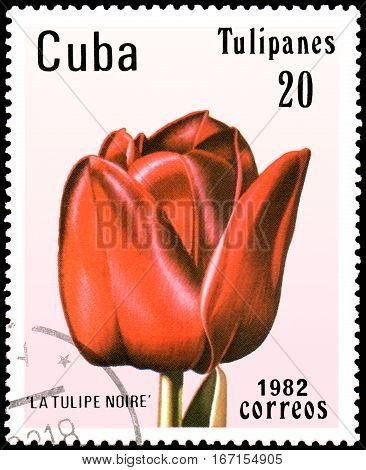 CUBA - CIRCA 1982: postage stamp printed in CUBA shows a red tulip
