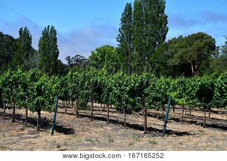 San Luis Obispo USA - july 15 2016 : the Claiborne and Churchhill winery