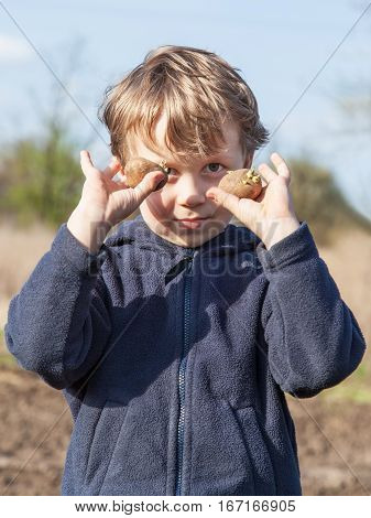 The boy shows sprouted of potatoes tubers before planting into the soil