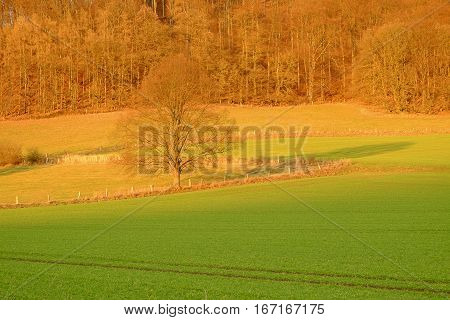 Green agricultural fields a single tree and forest on the sunset in a famous German resort Bad Pyrmont Lower Saxony Germany in winter.