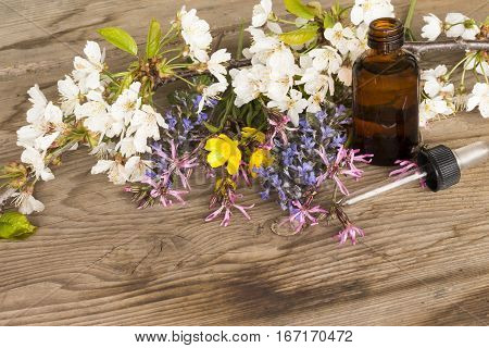 Essence Of Spring Flowers On Wooden Background