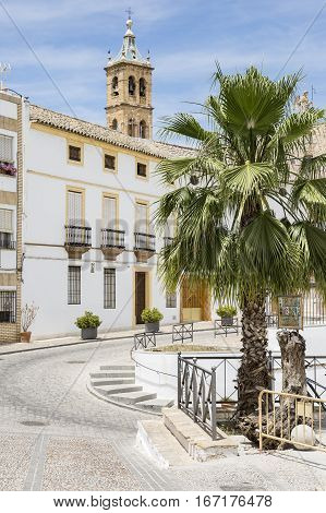 a square with a palm tree and the church in Castro del Rio city, province of Córdoba, Spain