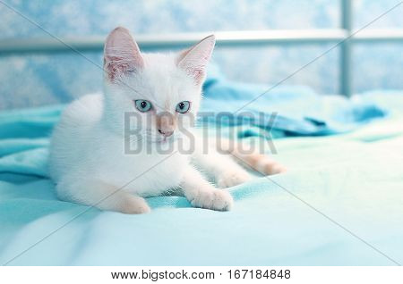 White cat sitting on the bed resting