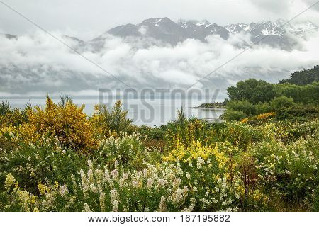 Wildflowers around the misty Lake Wakatipu close to Queenstown on the South island of New Zealand
