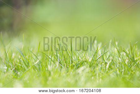 Defocused grass on field in spring time