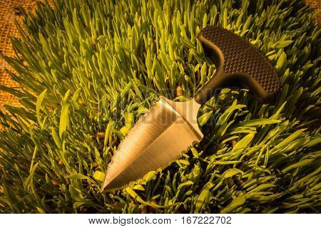 Urban Knife On Grass. Clouse Up. Warm Temperature.