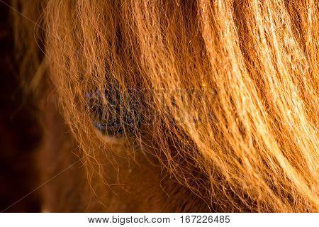 Portrait of horse. Horse eye closeup. .