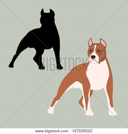 american staffordshire terrier vector illustration style Flat set