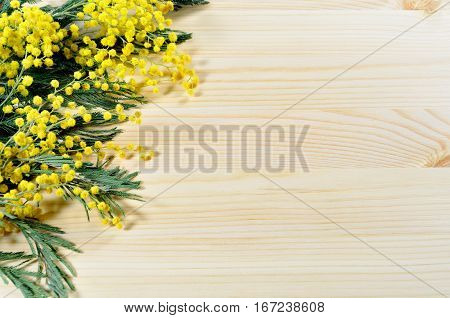 Mimosa flowers on the light wooden background. Selective focus at the mimosa flowers. Mimosa flowers background