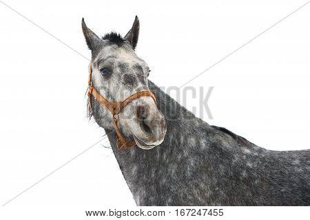 Horse's Portrait Isolated