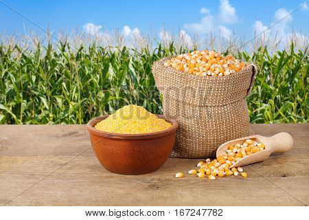 Dry uncooked corn grains in burlap bag and corn groats in bowl on wooden table with field on the background. Agriculture and harvest concept. Maize with maize field background