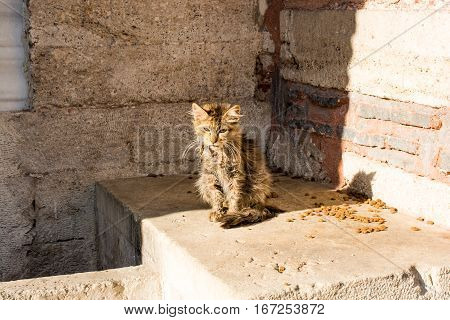 Another Portrait Of A Homeless Miserable Street Cat
