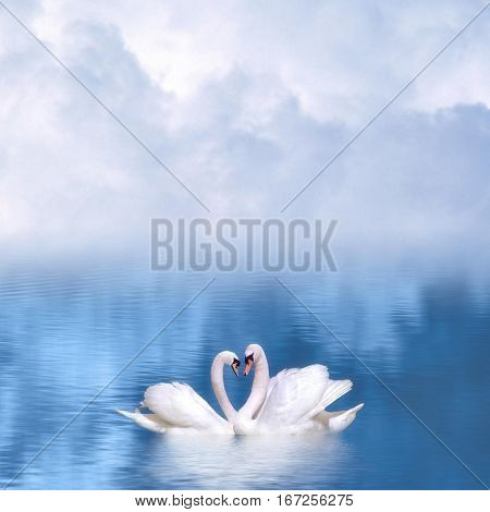 Graceful swans in love against a foggy background