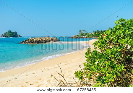 Greenery At The Beach