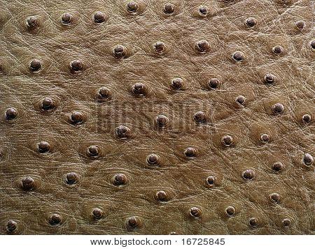 Elephant skin background.