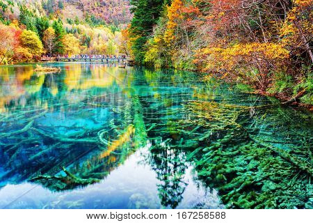 Amazing Submerged Tree Trunks In Water Of The Five Flower Lake