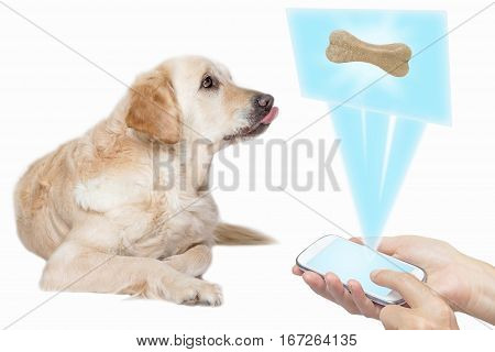 Golden Retriever Dog with protruded tongue is looking up at a screen transparent rectangle with dog bone based on the smart phone held by female hands. All potential trademarks and buttons are removed.