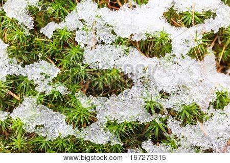 Natural background: snow on green moss.
