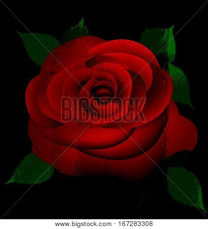 black background and red-colored fantasy flower rose