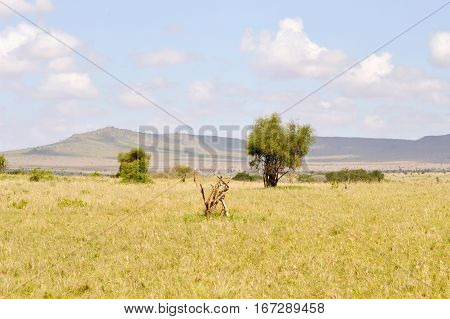 View of the Tsavo East savannah in Kenya with the mountains in the background