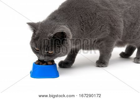 Cat eating food from a bowl on a white background. horizontal photo.