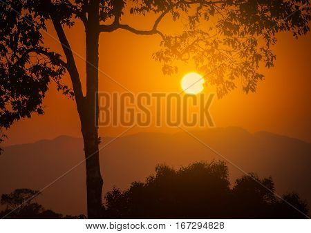 Sunset over mountains with silhouette branch tree.