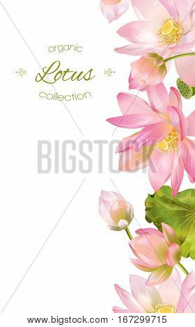 Vector botanical vertical banner with pink lotus flowers. Design for natural cosmetics, health care and products, yoga center. Can be used as greeting card or wedding invitation. With place for text
