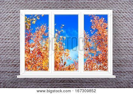 panoramic window with view to red and yellow leaves of aspens