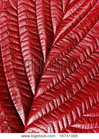 Red leaf closeup texture detail background.