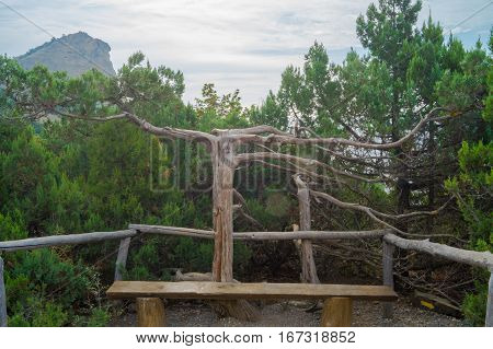 relict juniper grove in the mountains of Crimea