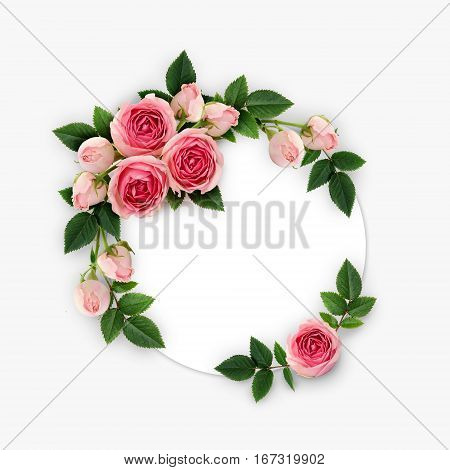 Pink rose flowers and buds arrangement on white circle card. Flat lay top view.