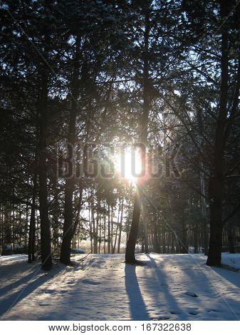 pictures of the sunset on the background winter forest landscape landscape filtering through the trees the sun's rays, as the source for design, fine art printing, photo shop, advertising