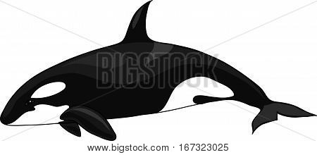 The  black-and-white orca on a white background.
