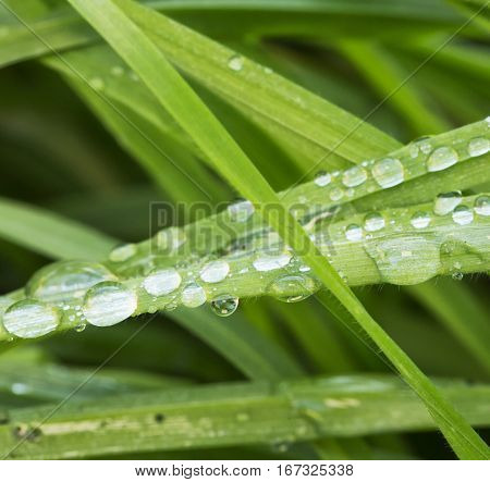 Drops Over Grass Blades