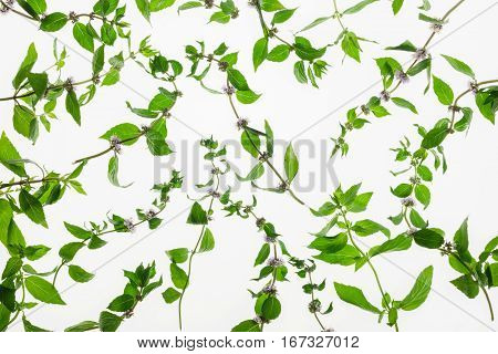 Mint herb pattern isolated on white background. Studio backlit image of green plant, healthy natural organic food, cooking ingredient