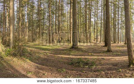 Woodlands trees landscape and state parks Washington state.