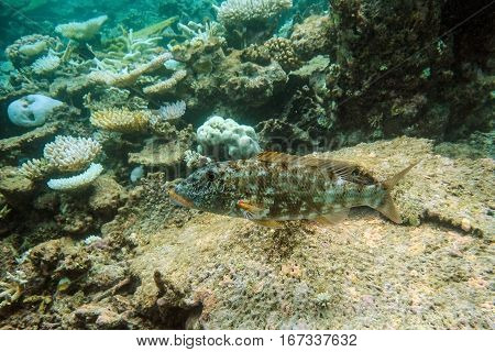 Underwater world with coral and tropical fish, coral reef life, oceanic landscape