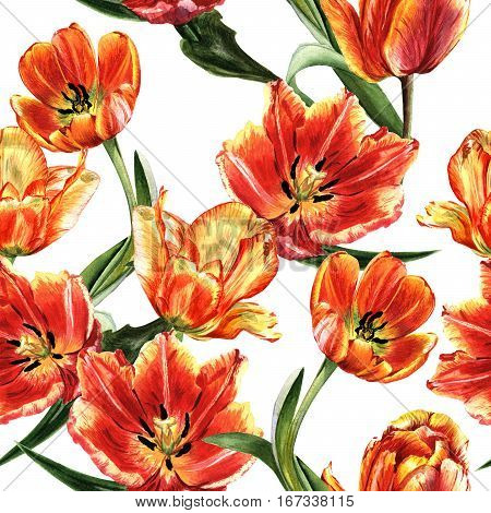 Wildflower tulip flower pattern in a watercolor style isolated. Full name of the plant: red tulip. Aquarelle wild flower for background, texture, wrapper pattern, frame or border.