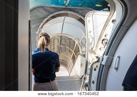Back view of stewardess standing near exit of airplane