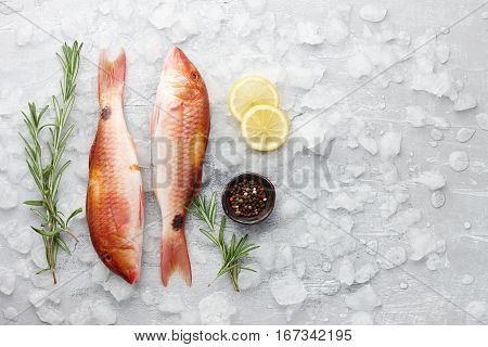 Fresh red mullet fish with lemon, peppercorns and rosemary on icy stone background