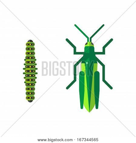 Insect icon flat set isolated on white background. Nature flying butterfly beetle vector ant. Wildlife spider grasshopper or mosquito dragonfly animal illustration.