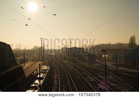 Birds flying through warm sun over train station in winter time