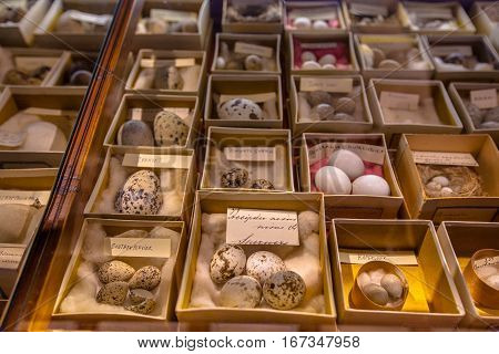 Show Case In Natural History Museum With Eggs