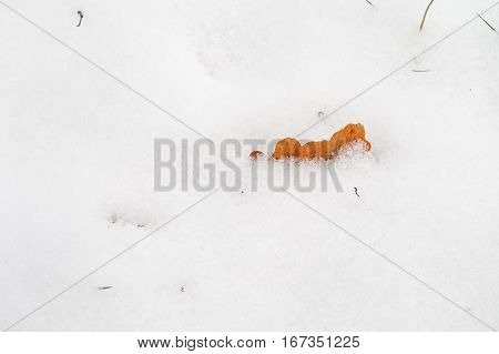 closeup of the yellow dry leafs buried by snow