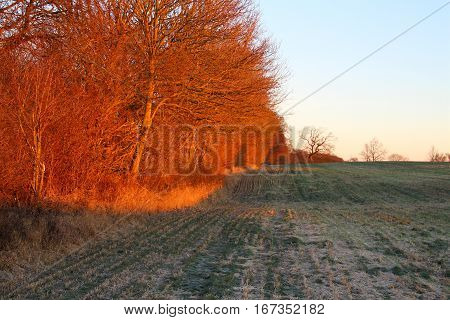 Reddish light in the sunrise in January