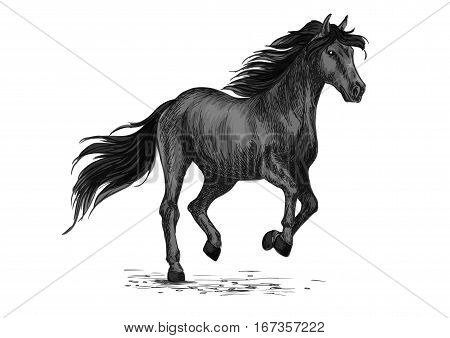Animal horse or stallion abling sketch.Equine natural animal running or american breed broodmare gait, purebred mustang trot. Nature or wildlife, sport equestrian club or hippodrome, stable or stall theme