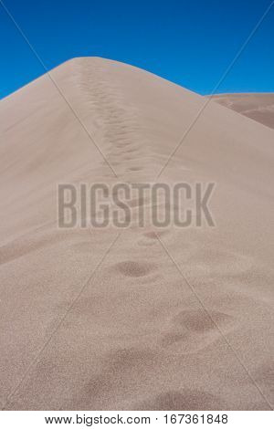 Footprints leading up the ridge of a sand dune in Great Sand Dunes National Park in Colorado.