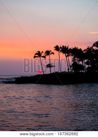 Silhouette of palm trees at sunset on the big island of Hawaii.