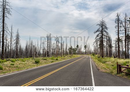 Asphalt road through deadwood