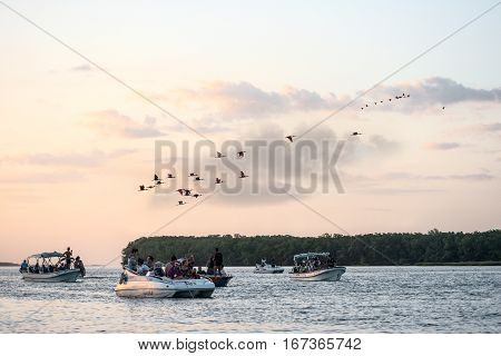 Parnaiba Brazil - 16 JULY 2016: Tourists have a trip and bird watching scarlet ibis on the delta of Parnaiba river northern Brazil